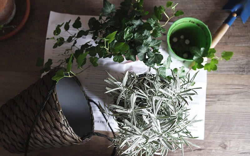 Ten tips to help your houseplants survive the winter