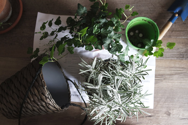 Ten tips to help your houseplants survive the winter